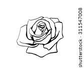 Stock vector rose sketch black outline on white background vector illustration 311547008