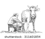 sketch of woman milk a cow by... | Shutterstock .eps vector #311601854
