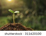 young plant in the morning... | Shutterstock . vector #311620100