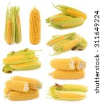 corn on a white background | Shutterstock . vector #311649224