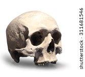 Human Skull On White Background.