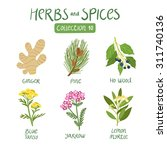 herbs and spices collection 10. ...   Shutterstock .eps vector #311740136