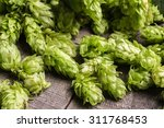 fresh green hops on a wooden... | Shutterstock . vector #311768453
