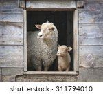 Sheep and small ewe in wooden...