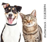 Stock photo closeup of a happy and smiling tabby cat and mixed breed dog looking forward into the camera 311828894