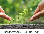 agriculture. growing plants.... | Shutterstock . vector #311852234
