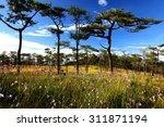Murdannia Giganteum Field  Wil...