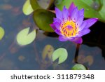 beaulfull water lily in the... | Shutterstock . vector #311879348