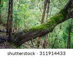 Moss On Rain Forest Tree