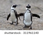 African Penguins. African...