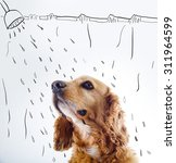 Stock photo cute english cocker spaniel puppy in front of a white background with shower courtain and water 311964599