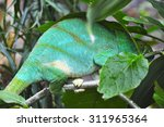 Small photo of african chameleon