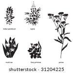 Wildflowers Of Western Usa