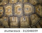 Stock photo texture of turtle carapace 312048359