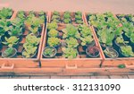 vegetable community garden with ... | Shutterstock . vector #312131090