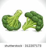 broccoli | Shutterstock .eps vector #312207173
