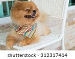 Pomeranian Puppy Dog Grooming...