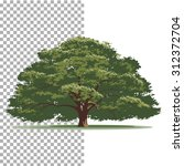 Oak Tree. Isolated Vector Tree...