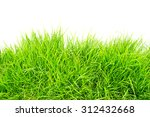 grass on white background | Shutterstock . vector #312432668
