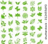 green natural set | Shutterstock .eps vector #312455693