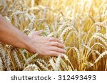 Farmer In Field Touching His...