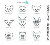 set of cats | Shutterstock .eps vector #312495203