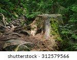 Tree Stump After Deforestation...
