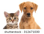 Stock photo cat and dog 312671030