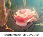 Stock photo pink garden rose 312692210