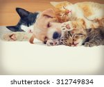 Stock photo kitten and puppy sleeping together 312749834