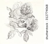 vintage flower illustration.... | Shutterstock . vector #312774068