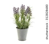 Lavender Plant In A Metal Pot...