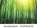 bamboo forest | Shutterstock . vector #312926210