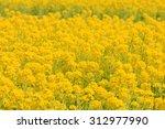 rape | Shutterstock . vector #312977990