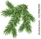 Green Lush Spruce Branch. Fir...