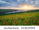 Sunset Over A Field Of Poppies...