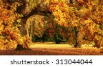 tranquil autumn scenery showing ... | Shutterstock . vector #313044044