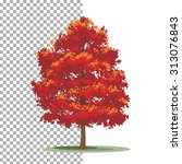 Red Maple Tree. Isolated Vecto...
