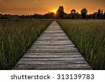 a  beautiful sunset scene along ... | Shutterstock . vector #313139783