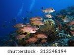 school of soldierfish swimming... | Shutterstock . vector #313248194