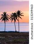 tropical sunset with palm trees ... | Shutterstock . vector #313249463