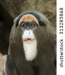 De Brazza's Monkey At Bimingha...