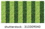 striped green grass soccer field | Shutterstock .eps vector #313309040