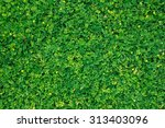 green leaf texture leaf texture ... | Shutterstock . vector #313403096