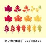 Various Autumn Leaves Set....