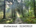 Forest Sun Harp