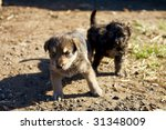 two little mongrel puppies | Shutterstock . vector #31348009