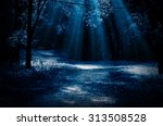 Night Forest With Moonlight...