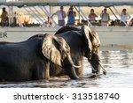 Chobe  Botswana   June 7  2015...