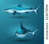 sharks   Shutterstock .eps vector #313675046